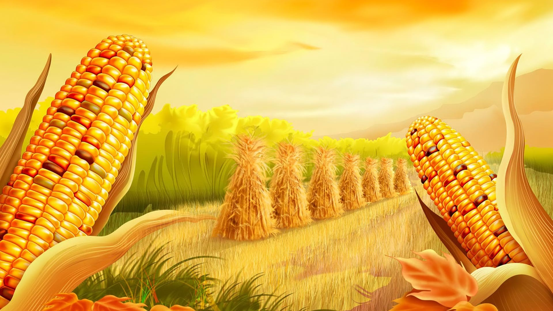 Hd Wallpaper Texture Fall Harvest Corn Ready To Harvest Golden Hd Wallpaper