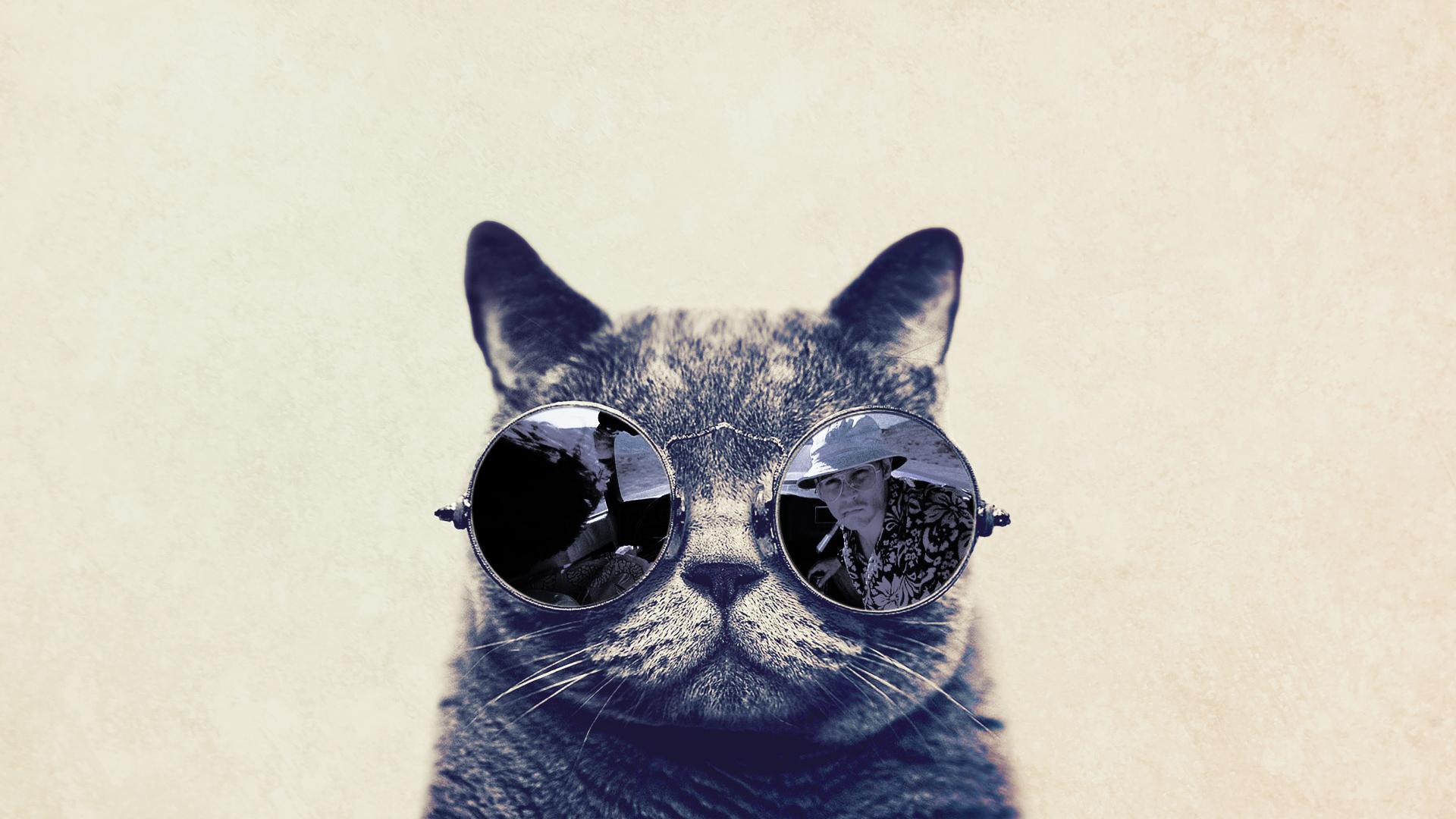 Goggles Girl Wallpaper Fashion Cat With Sunglasses Hd Funny Wallpaper