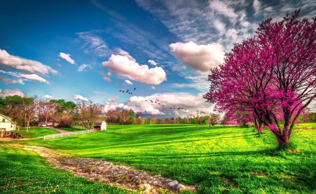 Landscape Beautiful Spring Nature Hd Wallpaper Wallpaper