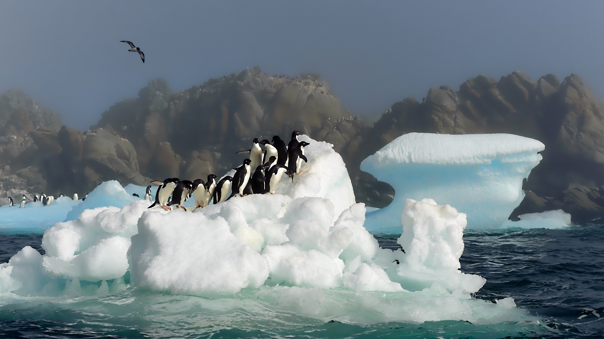 Cute Cartoon Bird Wallpapers Many Penguins On A Iceberg Antarctica Wallpaper