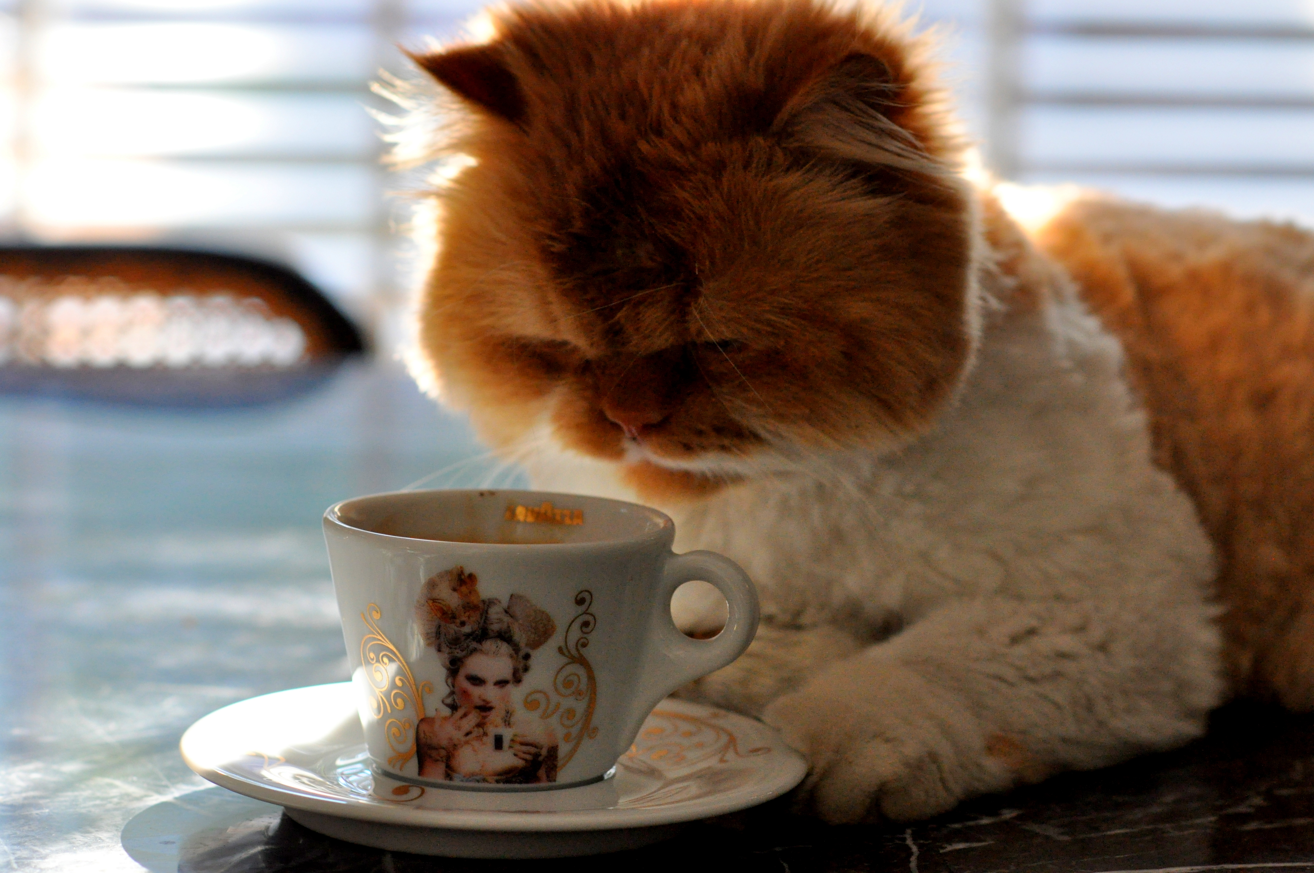 Cute Nutella Wallpapers My Cat Loves Coffee Hd Funny Wallpaper