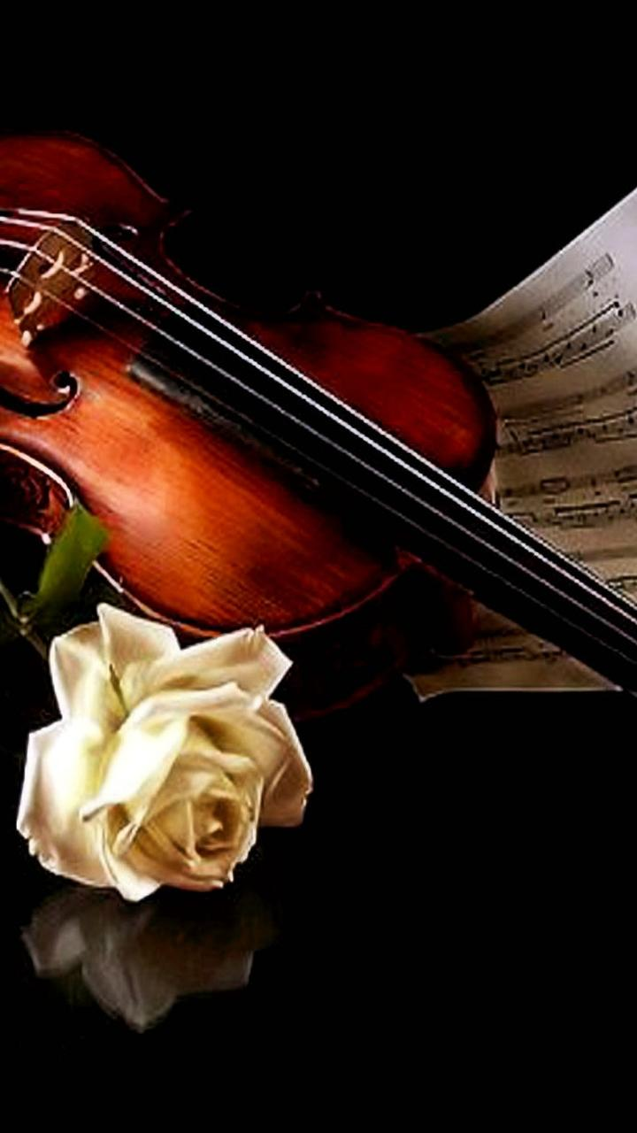 Cute 3d Cartoon Wallpapers The Music Of Violin And A Beautiful White Rose Wallpaper