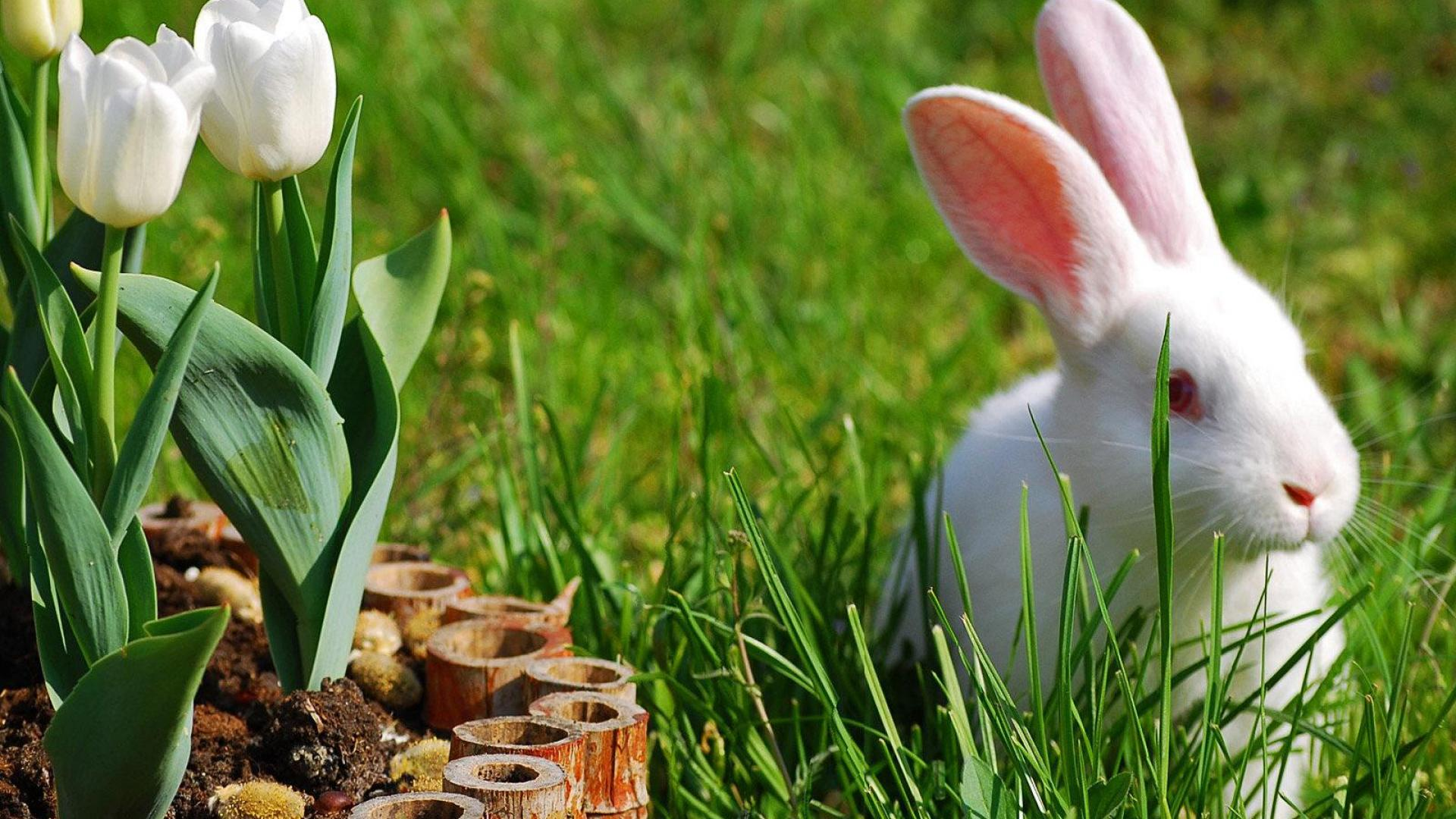 Cute Cartoon Wallpapers For Pc White Rabbit With Red Eyes In The Grass