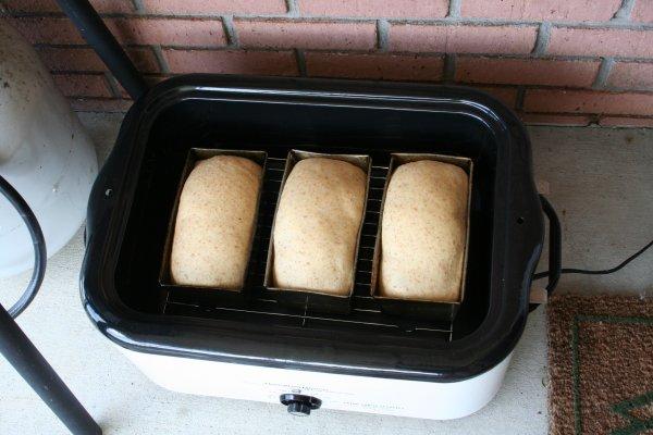 Three loaves ready to bake