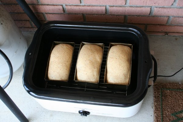 Three loaves ready to bake