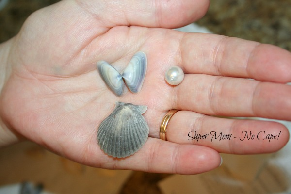 scallop shell, two halves of clam shells and one bead
