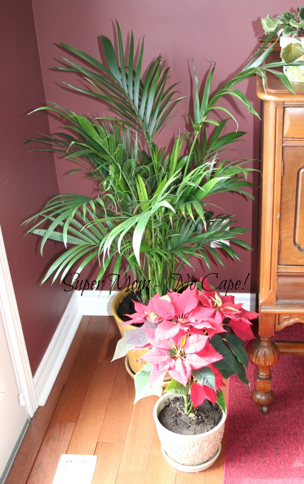 Palm tree in its new home