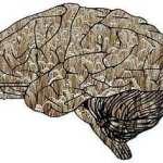grain brain book review summary