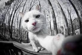 selfie 8