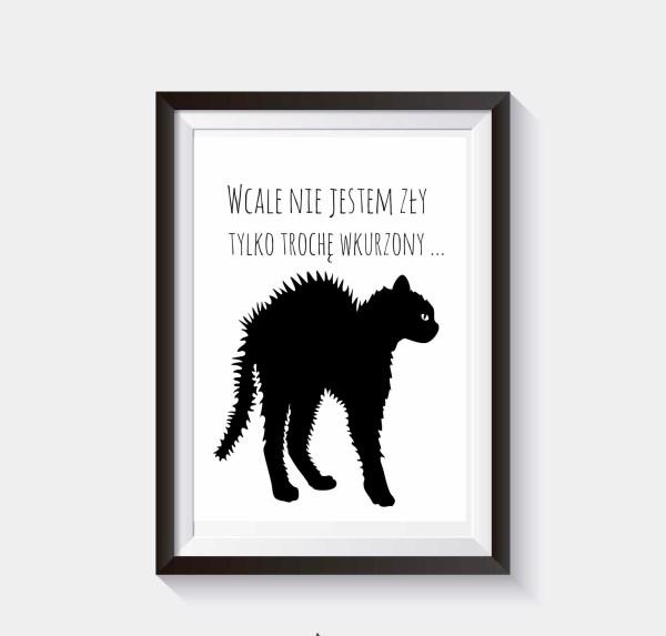 Plakat na ścianę koty grafika o kotach