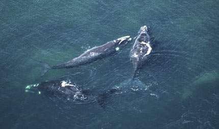 Mar Tirreno: balene in aumento del 300%