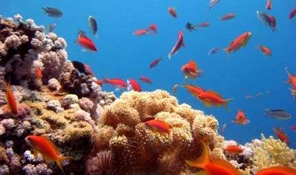 Se si ammalano i coralli