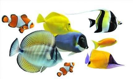 Riconoscere i pesci: ecco le guide fotografiche