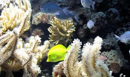 Il Reef sconosciuto