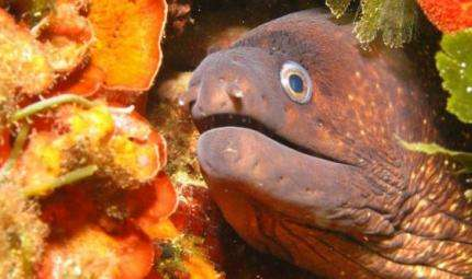 Safari subacqueo, ad Alassio il campionato italiano