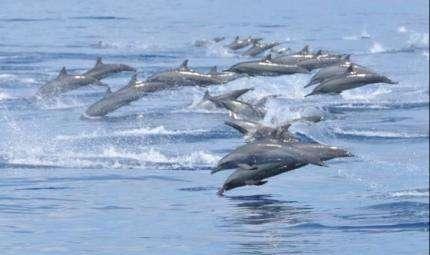 Il senso dei delfini per i campi magnetici