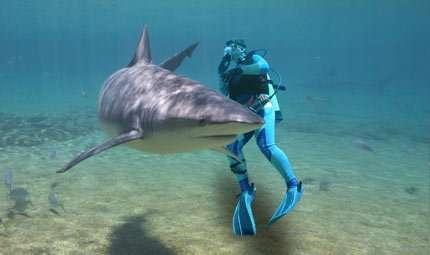 Subacquei in soccorso degli squali