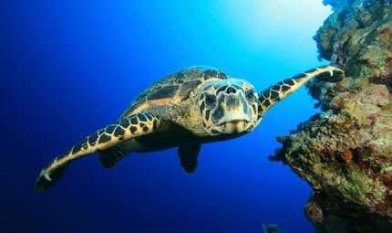 A Linosa corsi estivi di biologia marina