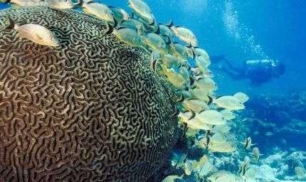Weekend subacqueo a Ischia