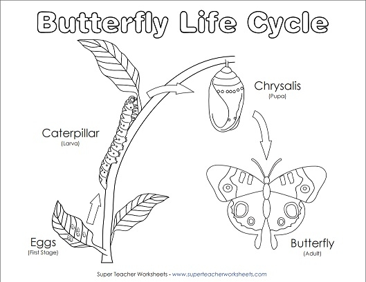 caterpillar diagram for kindergarten