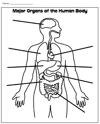 Printable Human Body Worksheet
