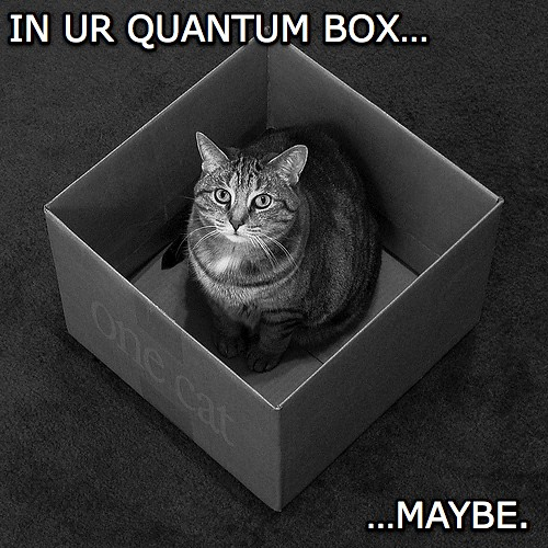 """A photo of a cat in a box, with superimposed text: """"In Ur Quantum Box... Maybe"""""""