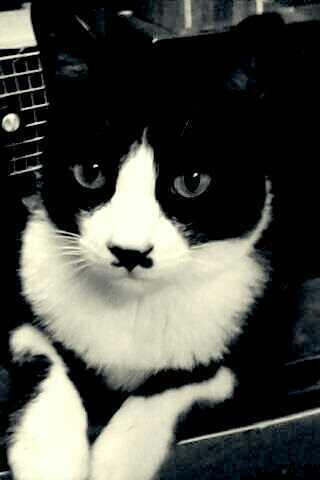 貓咪論壇 - 黑白貓[賓士貓]大集合