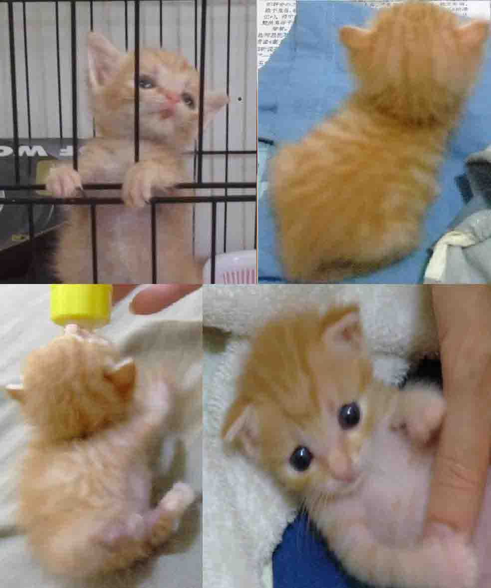 貓咪論壇 - [求助]幼貓離開媽媽了,一直叫怎麼辦?