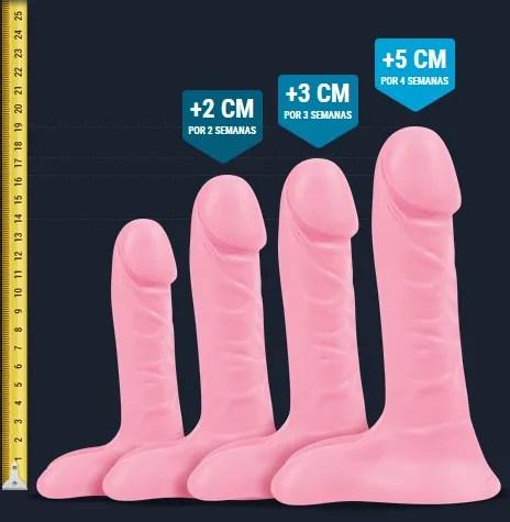 demonstração do crescimento do pênis em semanas