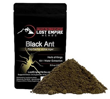 Image Of Black Ant King
