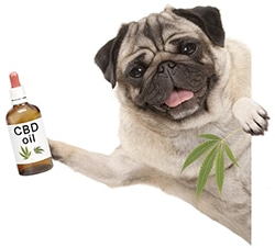 CBD Öl Hund