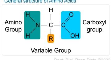 amino_acids