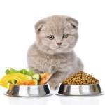 Top 10 Best Supplements for Cats