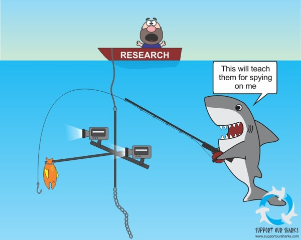 Funny Cartoons About Research