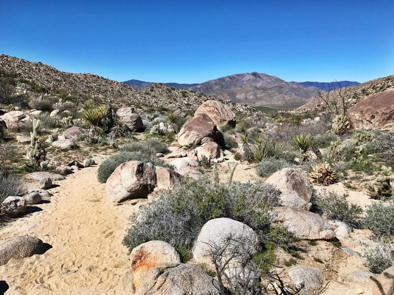 Mountain Palms Oasis Loop