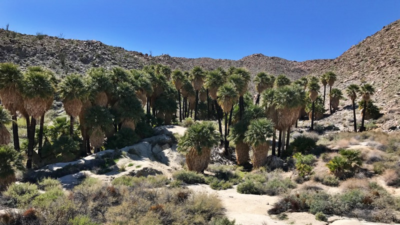 Southwest Grove On The Mountain Palms Oasis Trail