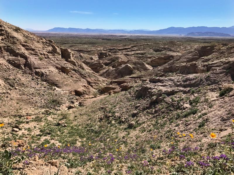 Wildflowers Blooming In The Badlands