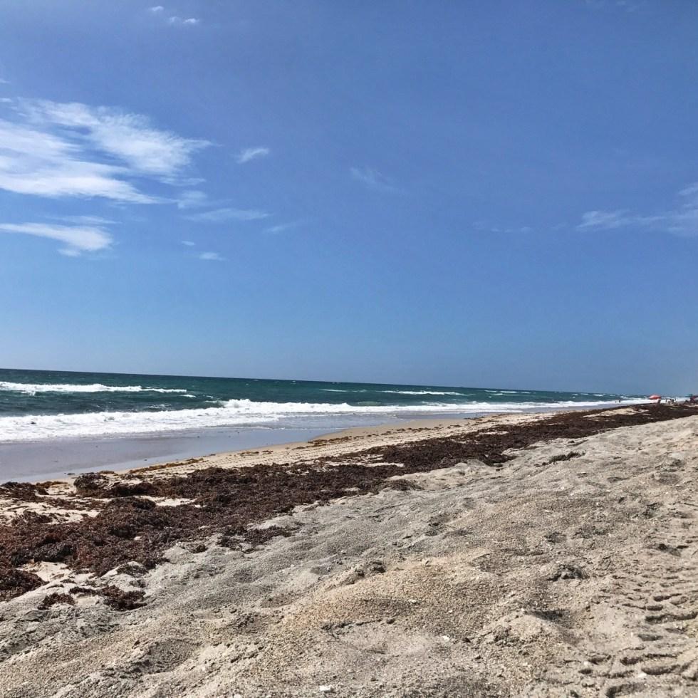 View South From Ocean Ridge Hammock Park Beach