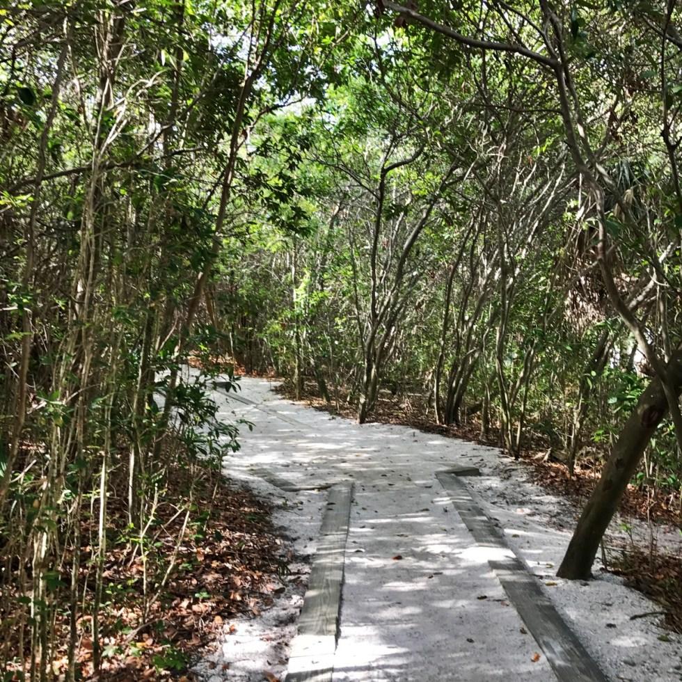 Walk Through The Mangrove Forest To Access The Beach