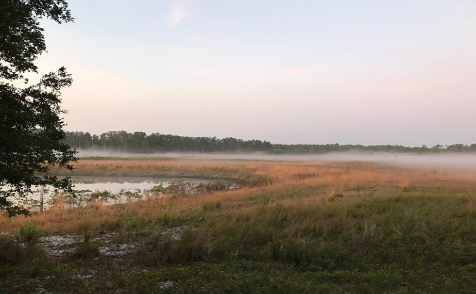 Dreamy Morning At Hopkins Prairie Campground