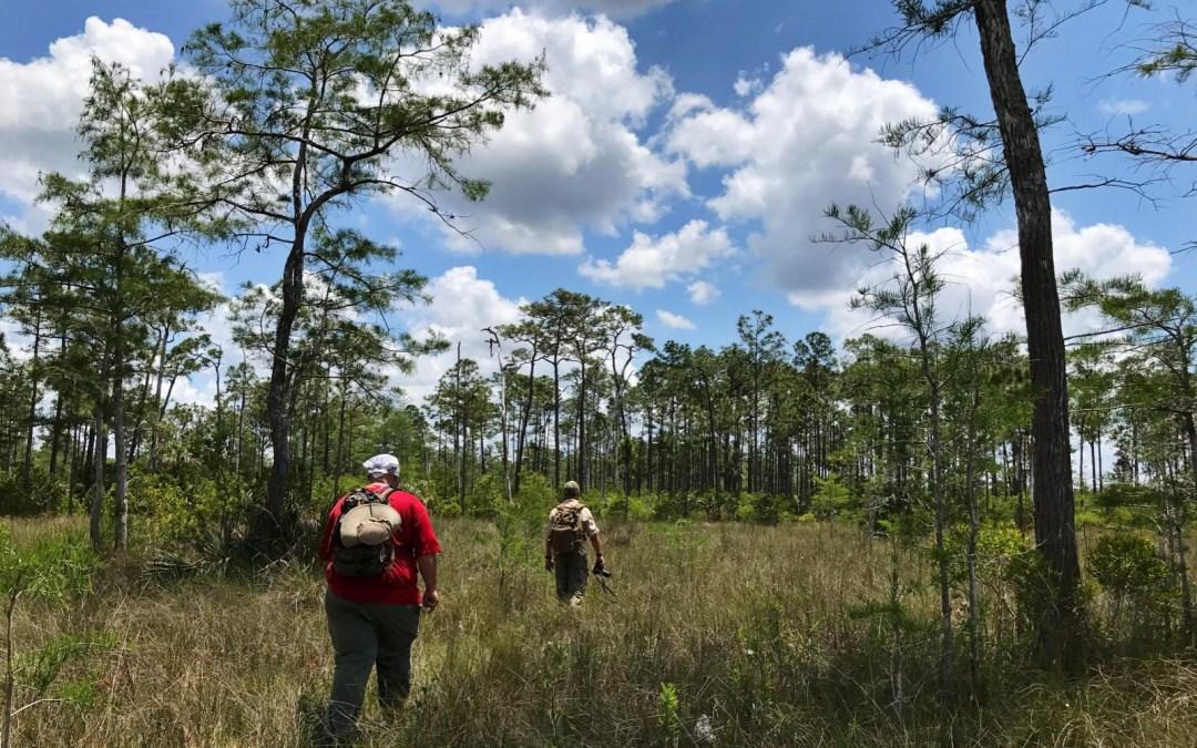 Day 47: Collier-Seminole SP; Big Cypress NP; Florida NST; Fakahatchee Strand Preserve SP