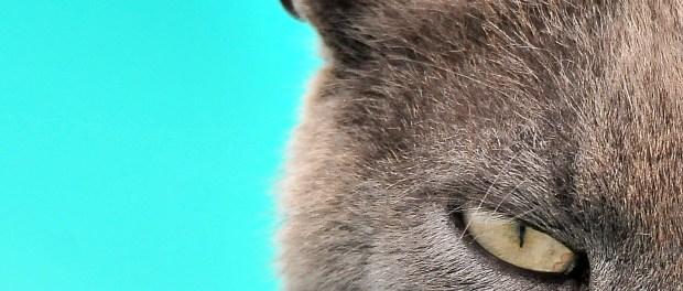 Fascia di Rispetto: un'opportunità per la caccia fotografica