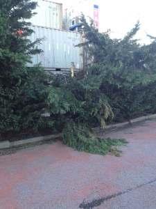 La siepe di pini devastata dai container