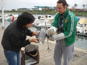 L'airone soccorso dai volontari dell'E.N.P.A.