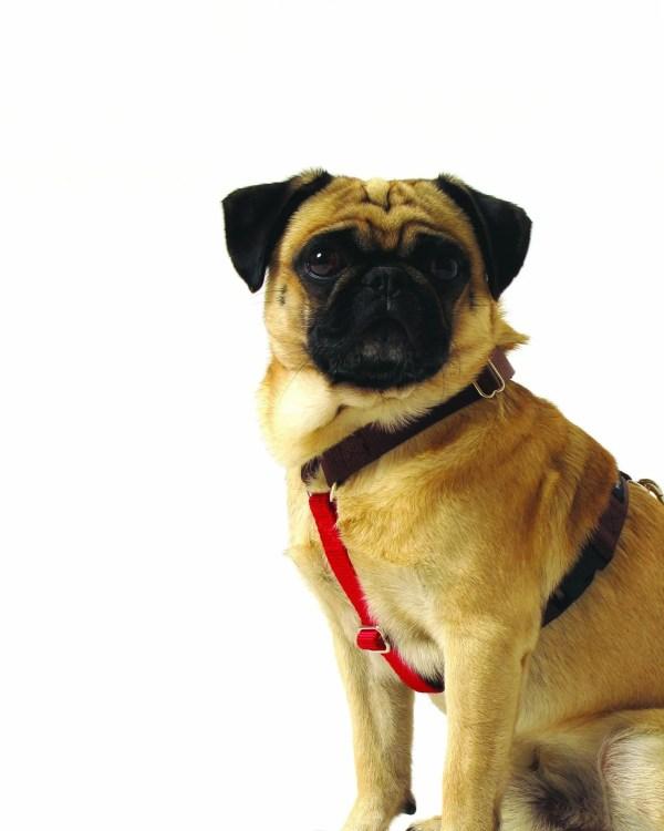 Contrast Nylon Dog Harness
