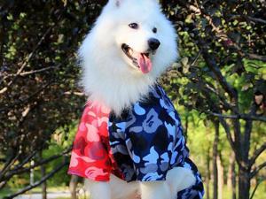 Big Dog Bathing Pup Camo Shark Jump Suit