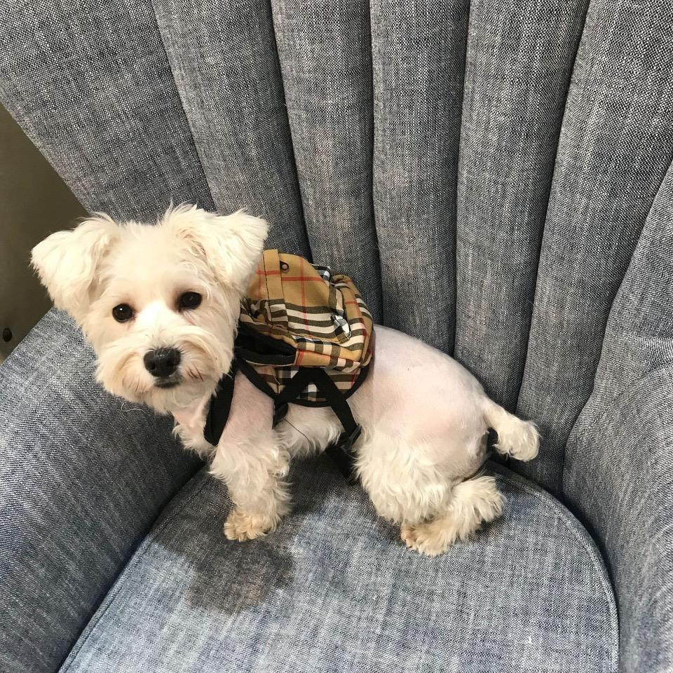 Furberry Dog Backpack