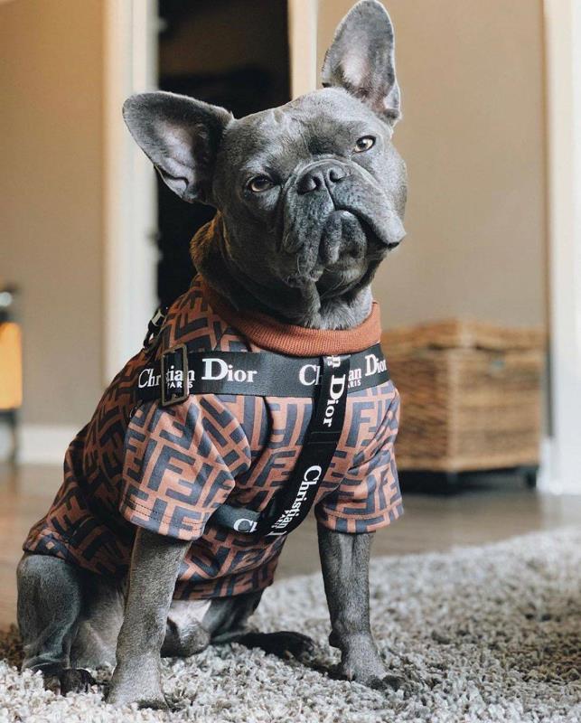 Dior Leash & Collar/Harness Set