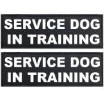 Service Dog In