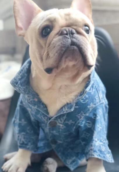 Chewy V Denim Dog Jacket